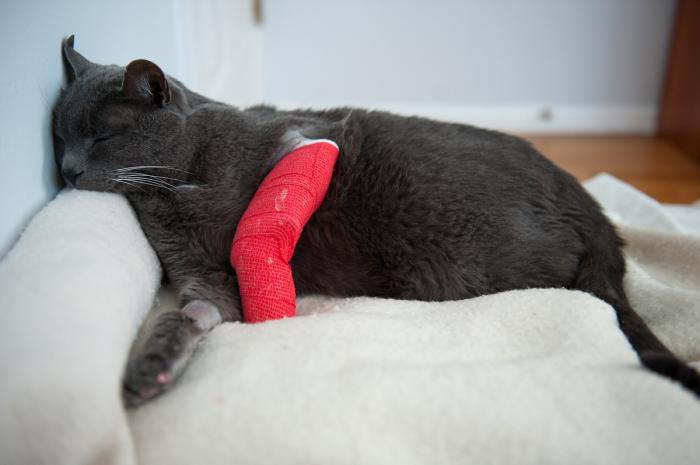 Otto Recovering from surgery